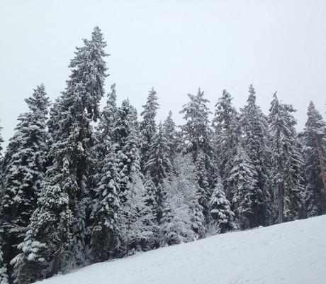 Реверсо ски лагер С дъх на зима Мальовица 2017 (26)